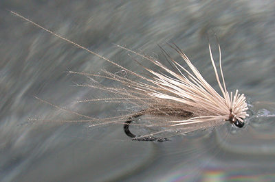 caddis-with-cdc.jpg