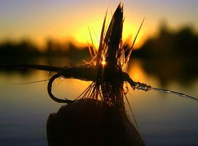 Adams Dry Fly~TMuncy