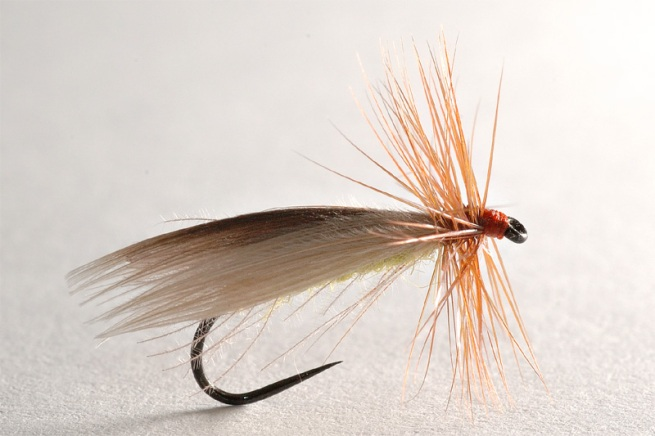 Low Water Caddis-Wing Still Untreated