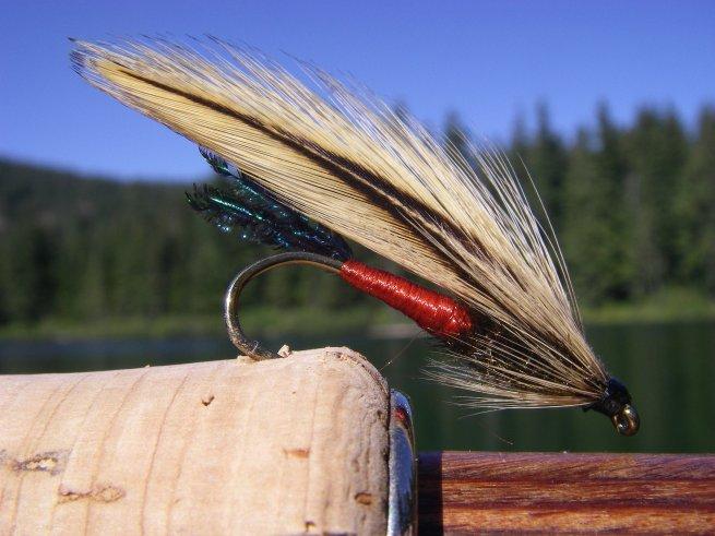 Spruce Fly~T.Muncy (Tier/Photo)
