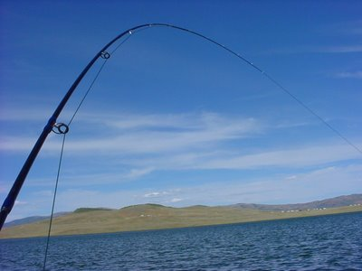 4 wt. Extreme Angling