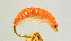 thorntonsfreshwatershrimp