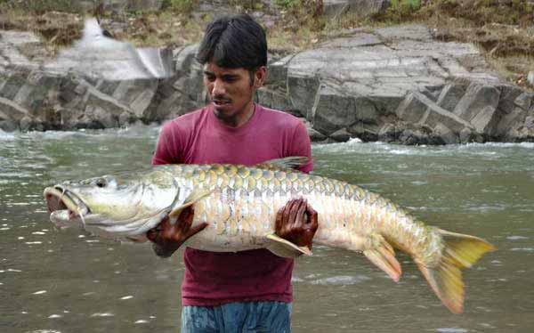 Fly fishing Northern India for Golden Mahseer on the fly ...