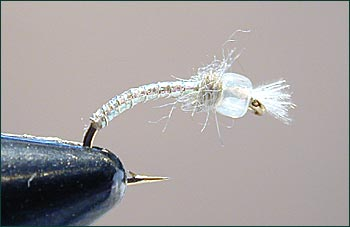 Phantom Midge~Jeff Morgan
