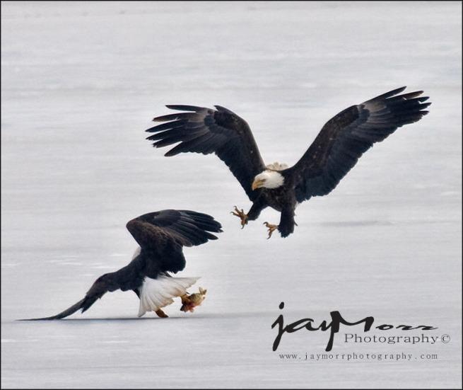 duel_eagles