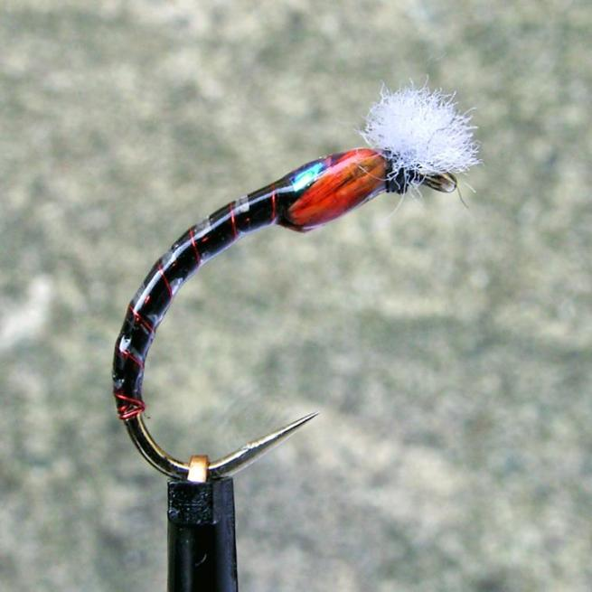 Midlander's Bubble Grey Boy Buzzer