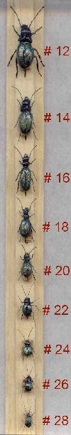 beehttpwwwgajafliesitbugs_itahtmltlescale