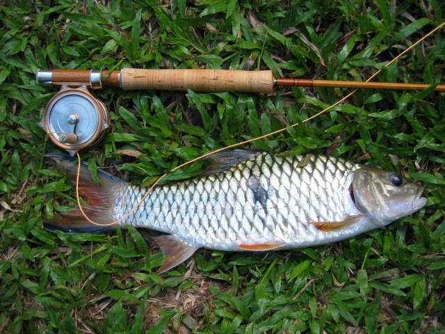 Sebarau Fish~http://flyfishingsg.proboards38.com/index.cgi