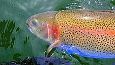 Rainbow's Illusions~Thanks to Larry Tamiyasu-Oregon