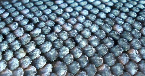 Scales[1]