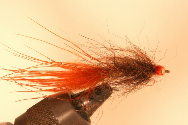 Hale Bopp Leech (Brown w/ Orange tail) SwittersB