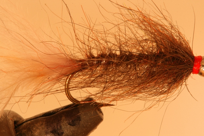 Hale Bopp Leech (Original Colors) SwittersB