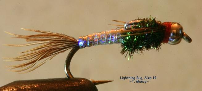 Lightning Bug T Muncy
