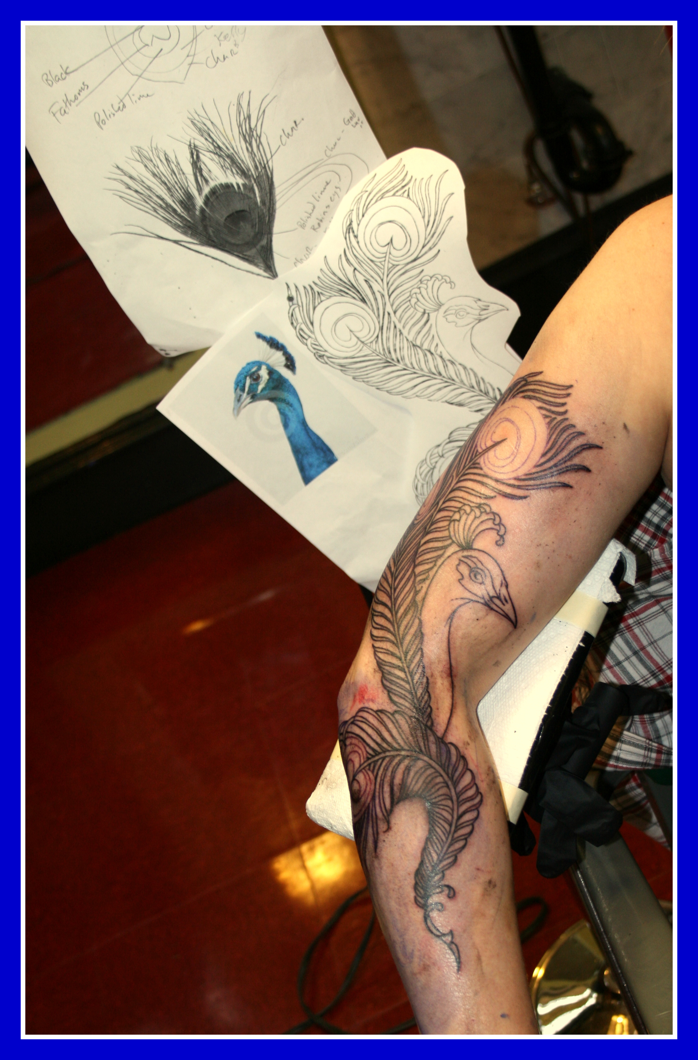peacock tattoo  design  u0026 application
