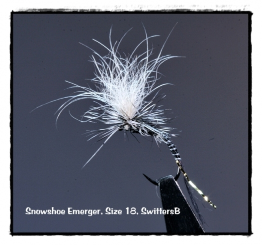 snowshoe-emerger-swittersb