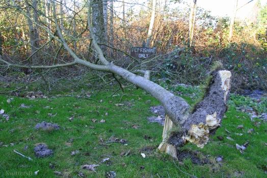 Tree Down SB
