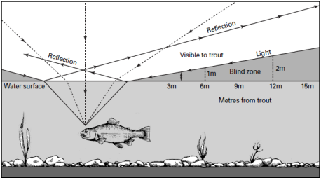 A-Trouts-Field-of-Vision