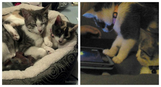 Kittens Playing Game collage
