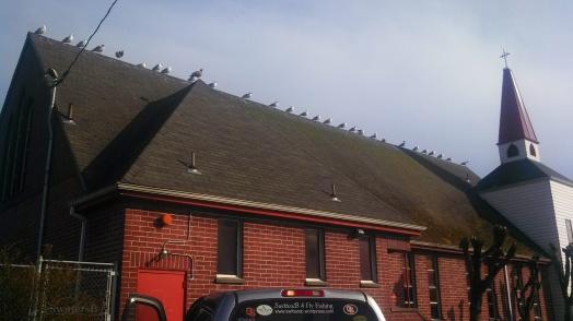 seagalls roofline sb