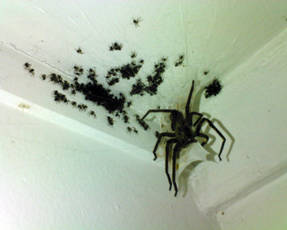 spider-hell