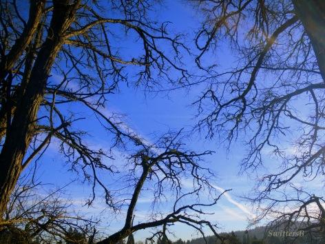 branches canopy haystk SB