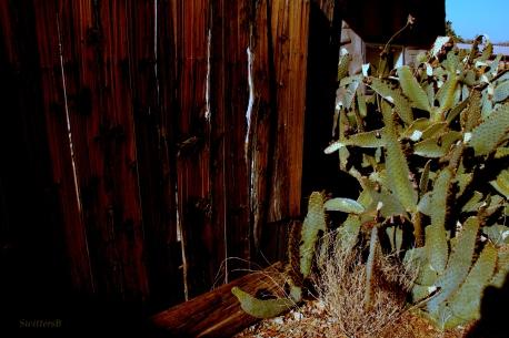 Cactus2SB