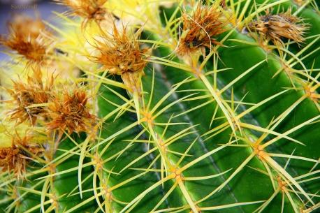 Cactus3SB