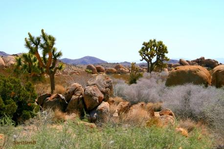 desert shot bright