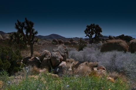 Desert Shot.jpg