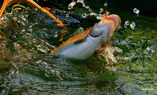 fishnetflysb