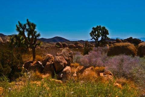 gradient filter desert shot JT.jpg