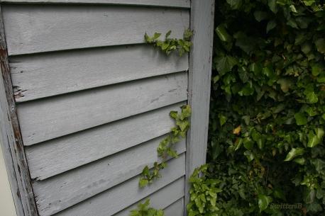 Ivy Creeps SB