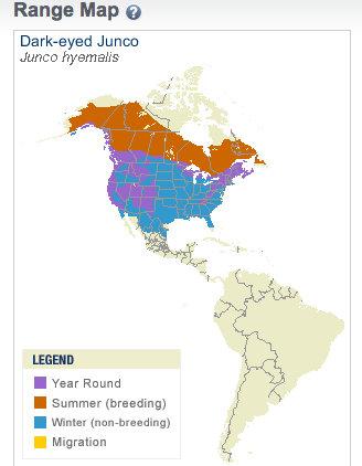 Junco Range