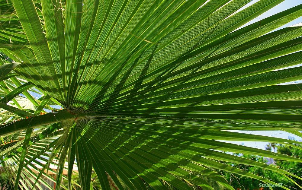 Palm Branch Symbol Swittersb Exploring
