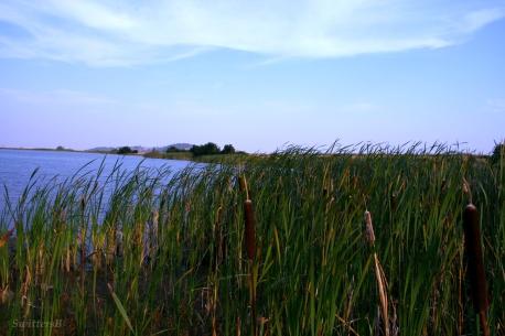 Reeds Bent Wind SB