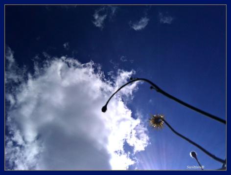 Summer Sky T Bkyd SB