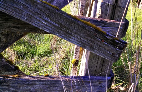 Old Fence 1 SwittersB