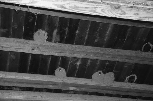 Barn Swallow Nests SB