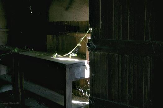 Bench Briar