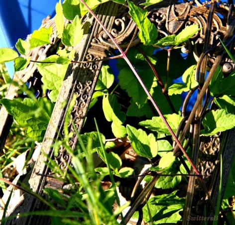 Garden3 SB