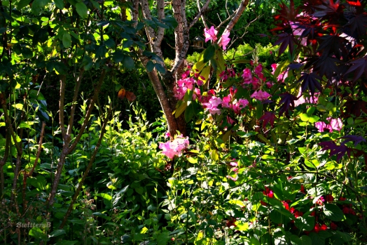Garden4 SB