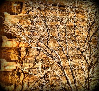 Lattice Dead Bush Cabin Old