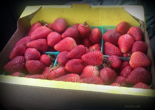Strawberries SB