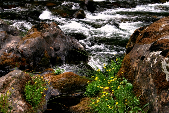 Yellow Flowers and Rapids