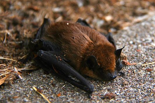 Bat 1 SB