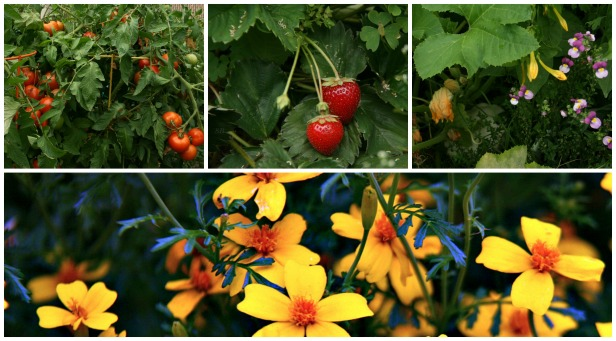 garden SB