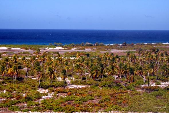 Island Veg Palms SB