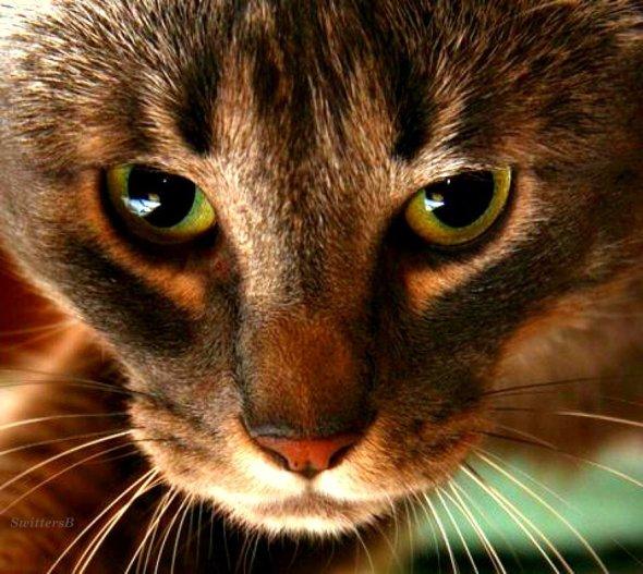 Penny the Cat SwittersB SwittersB SwittersB