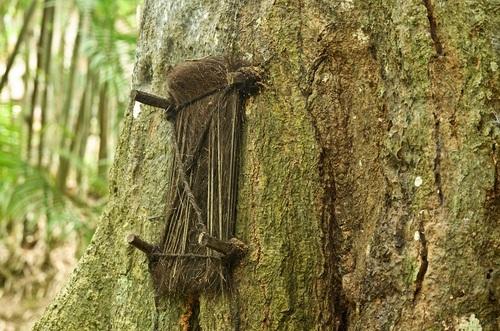 tana tree 3