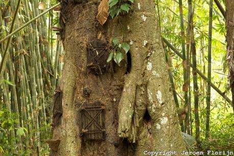 tana trees 2 jeroen florijn